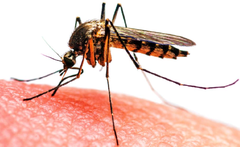 मकवानपुरमा मात्र हजार जना डेंगु संक्रमित