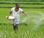 हिउँदे वर्षाले किसान हर्षित केटाकेटीलाई सास्ती