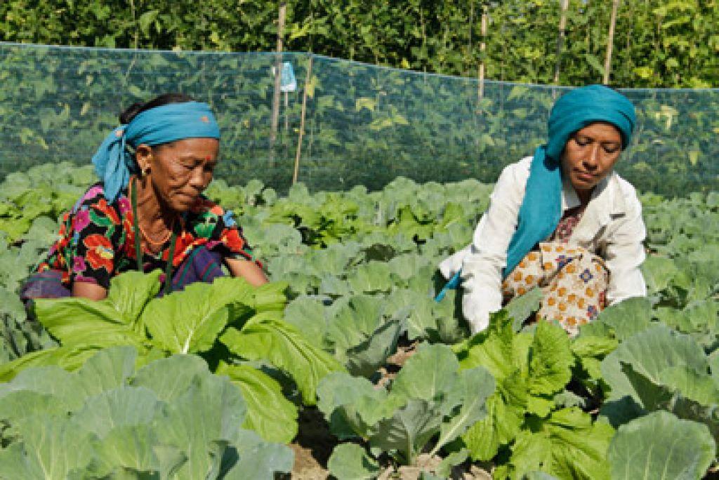कोरोना युरोपमा– प्रभाव किसानमा