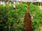 कृषि क्षेत्रमा ४१ अर्ब ४० करोड विनियोजन, चालु वर्षको भन्दा ७ अर्ब धेरै
