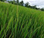 मानव जीवनका लागि कृषि अन्तिम विकल्प : कृषिमन्त्री केसी