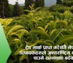 नेपाली चियाको ईतिहास र ट्रेड मार्कको महत्व