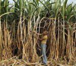 उखु खेती गर्ने किसानलाई आधुनिक यन्त्र वितरण