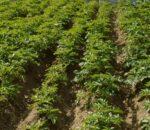 सुदूरपश्चिममा प्राङ्गारिक कृषि प्रणाली शुरु गरिँदै